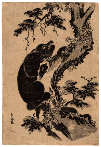 BLACK BEAR (Sawa Sekkyo)