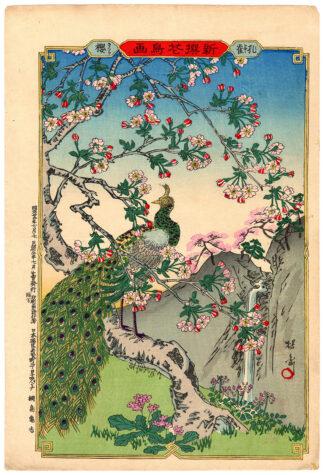 PEACOCK AND CHERRY BLOSSOMS (Yosai Nobukazu)