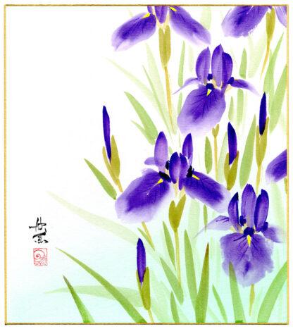 IRIS ENSATA (Nishimura Kingyo)